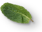 mint-leaves-2a.png